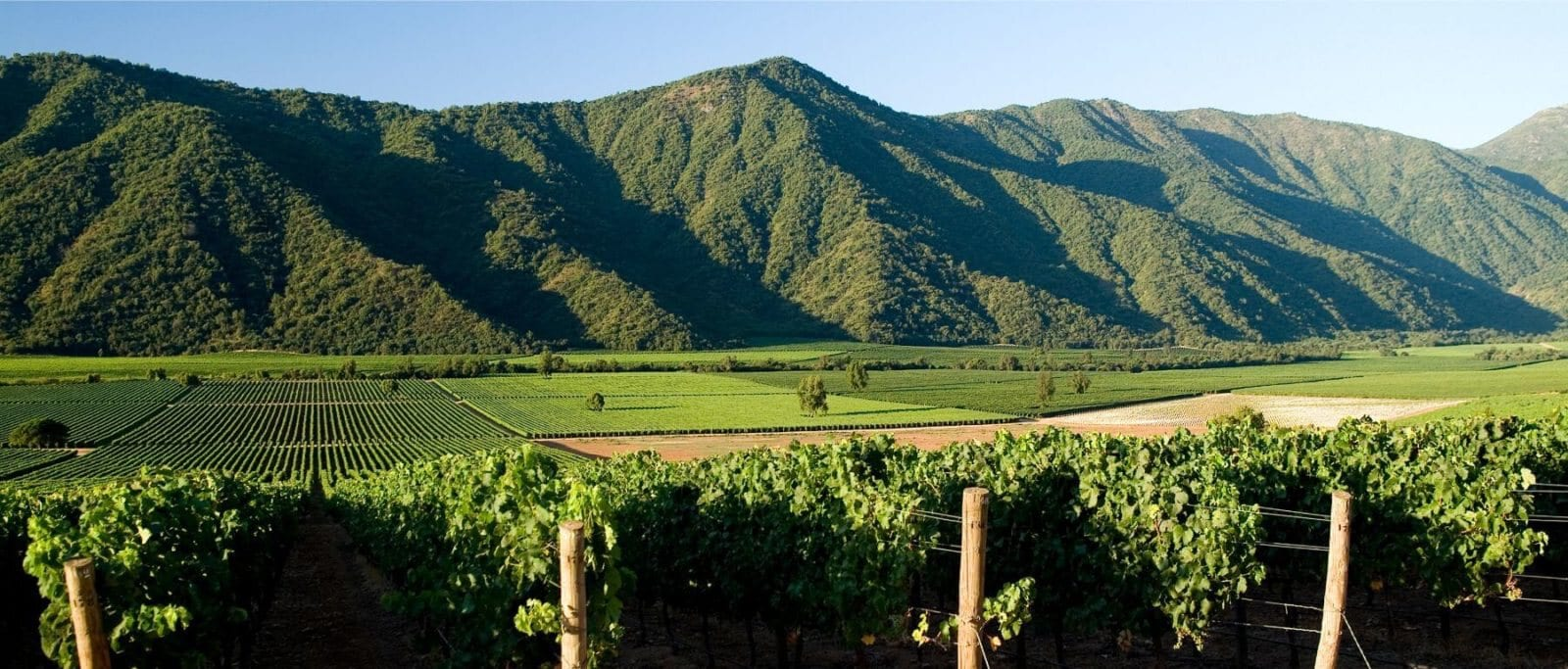 Veramonte Vineyards, Chile