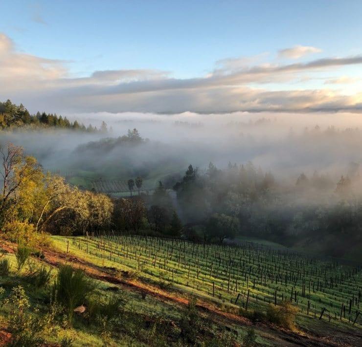 Barowsky Disesa Vineyards Healdsburg California