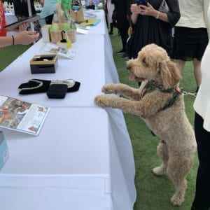 A four legged guest peruses the silent auction square
