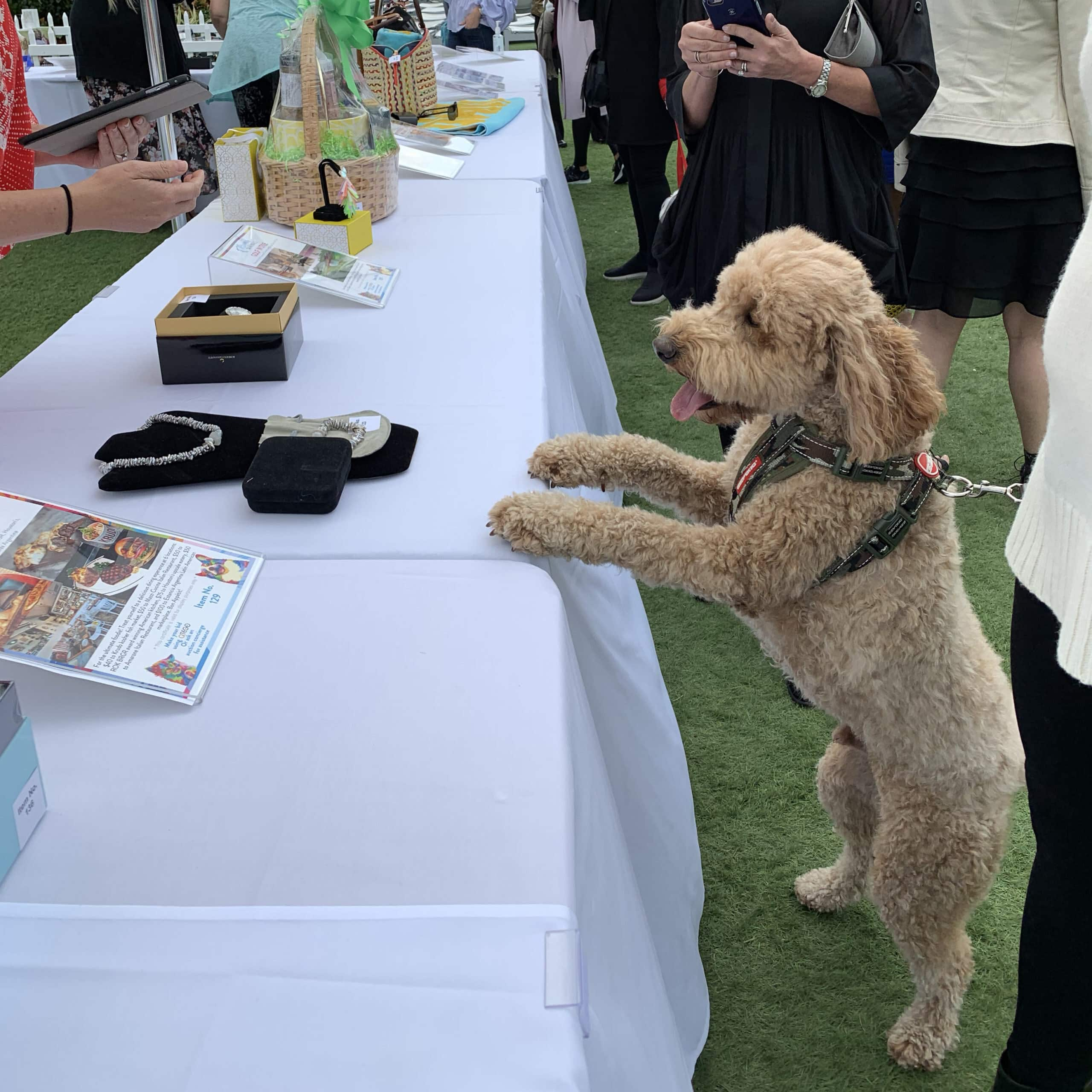 A four legged guest peruses the silent auction square scaled