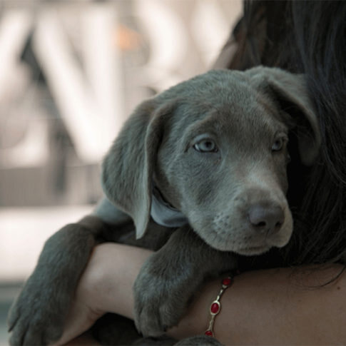 Humane Society of Greater Miami