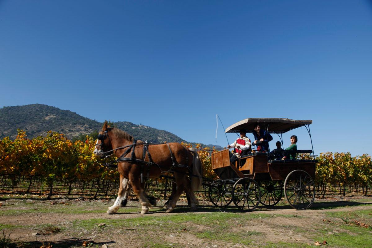 Colchagua Valley (SERNATUR/Chile Tourism)
