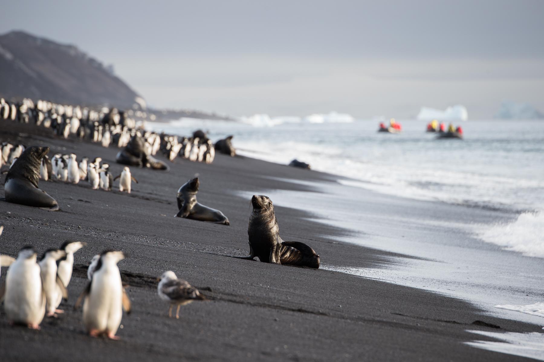 Antarctica (Ponant)
